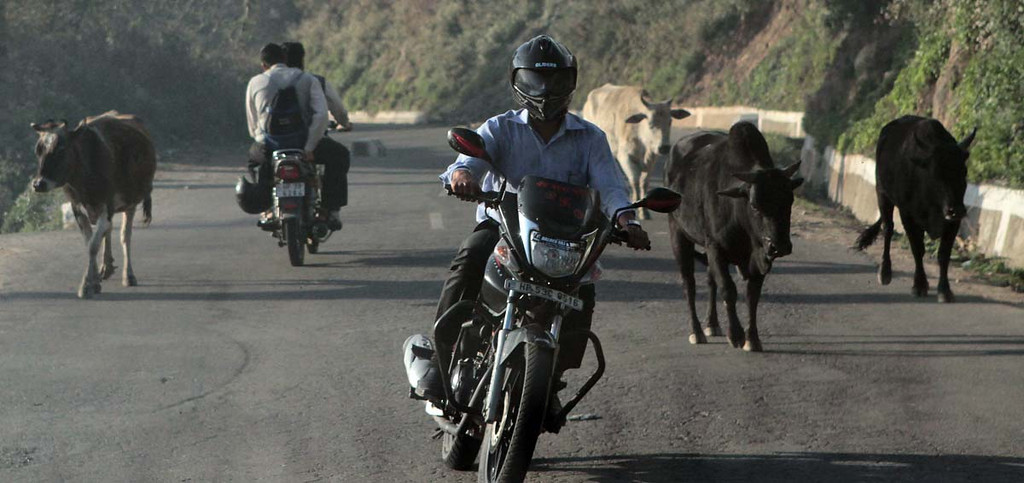 . Dharasala, India. Shmuel Thaler/Sentinel