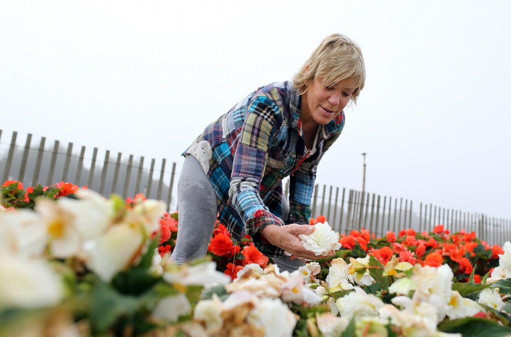 . Noel Castellanos helps pick begonias for her 13th year in Marina on Saturday. (Kevin Johnson -- Santa Cruz Sentinel)