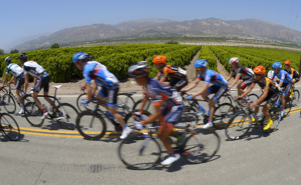 . The peloton rides by orange groves during the fourth stage of the Tour of California cycling race, Wednesday, May 15, 2013, in Fillmore, Calif. (AP Photo/Mark J. Terrill)