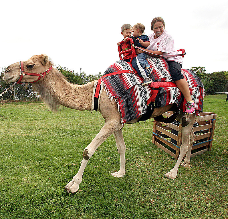 . Joshuah Tonozzi and Beckett Burruel of Santa Cruz ride a camel with their granny, Rebecca Schell Tuesday at the Santa Cruz County Fair.  (Dan Coyro/Sentinel)